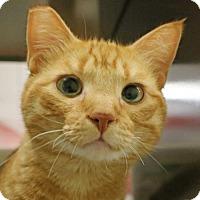 Adopt A Pet :: Pumpkin - Roseville, CA