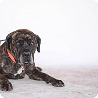 Adopt A Pet :: Moses - Goodyear, AZ