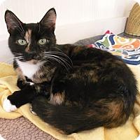 Adopt A Pet :: Vivian - Anacortes, WA