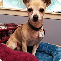 Adopt A Pet :: Julius in CT - Manchester, CT