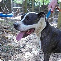 Adopt A Pet :: Oreo - Blairsville, GA