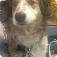 Adopt A Pet :: Skye - Elyria, OH