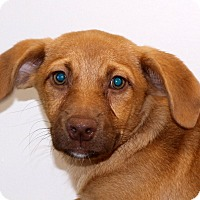 Adopt A Pet :: Tula~ meet me! - Glastonbury, CT