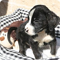 Adopt A Pet :: Keebler - Woonsocket, RI