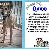 Adopt A Pet :: Quinn - Bealeton, VA