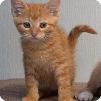 Adopt A Pet :: Neil Catrick Harris - DuQuoin, IL