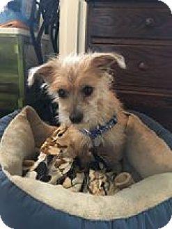 Rescue Small Dogs Portland Oregon