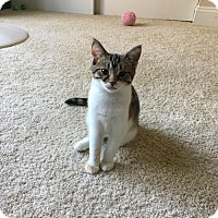 Adopt A Pet :: Fifi - Cincinnati, OH