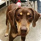 Adopt A Pet :: Lucy *Adoption Pending*