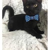 Adopt A Pet :: Irwin - Paducah, KY
