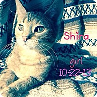 Adopt A Pet :: Shira - Silver Lake, WI