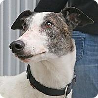Adopt A Pet :: Rosco - Santa Rosa, CA