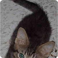 Adopt A Pet :: Snickers - Davis, CA
