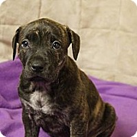 Adopt A Pet :: Twinkle - Hilliard, OH
