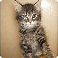 Adopt A Pet :: Pinky - Irvine, CA