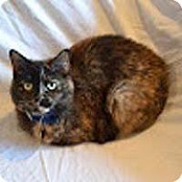 Adopt A Pet :: Caitlyn - N. Billerica, MA
