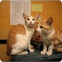 Adopt A Pet :: Tino - Orlando, FL