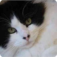 Adopt A Pet :: Barnaby - Davis, CA