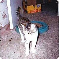 Adopt A Pet :: Garth - Kitten #2 - Warren, OH