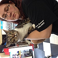 Adopt A Pet :: Pierre - Troy, OH