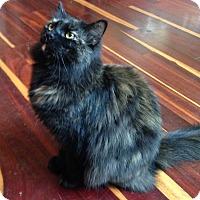 Adopt A Pet :: Rosie - Bentonville, AR