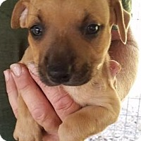 Adopt A Pet :: Cherry - Gainesville, FL