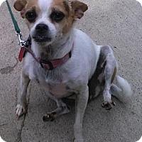 Adopt A Pet :: Rosie - Oberlin, OH