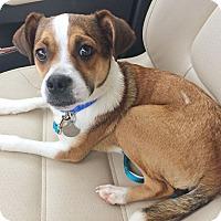 Adopt A Pet :: Scooter - Huntsville, AL