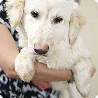 Adopt A Pet :: Snowbird - Appleton, WI