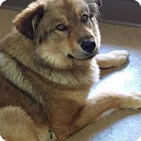 Adopt A Pet :: Hailey - Las Vegas, NV