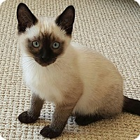 Adopt A Pet :: Wesley - San Fernando Valley, CA