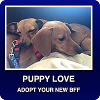 Adopt A Pet :: Ethyl & Ricky - Morrisville, PA