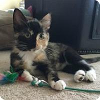 Adopt A Pet :: Nyla - McHenry, IL
