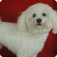 Adopt A Pet :: Dixon - Lawrenceville, GA