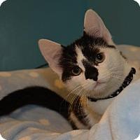 Adopt A Pet :: Mushroom - Cincinnati, OH
