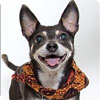 Adopt A Pet :: Hailey - San Luis Obispo, CA