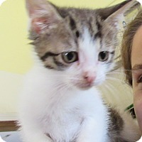 Adopt A Pet :: McBeane - Grinnell, IA