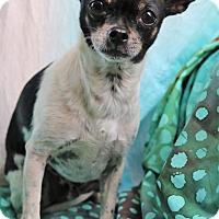 Adopt A Pet :: Howie - Bedminster, NJ