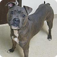 Adopt A Pet :: Nixon - Gary, IN
