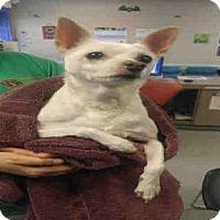 Adopt A Pet :: BUDDY - Louisville, KY