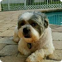 Adopt A Pet :: Arthur - Davie, FL