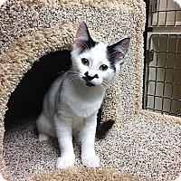 Adopt A Pet :: Ona - Creston, BC