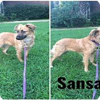 Adopt A Pet :: SANSA - Tallahassee, FL