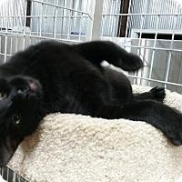 Adopt A Pet :: Midge - Montgomery City, MO