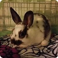 Adopt A Pet :: Alfie - Aurora, IL