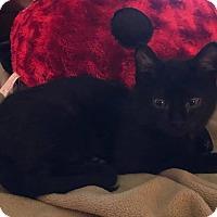 Adopt A Pet :: Casper - Newtown, CT