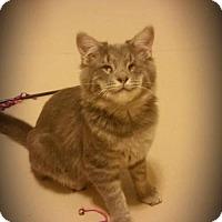 Adopt A Pet :: Pirate George - Grass Valley, CA