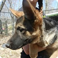 Adopt A Pet :: Helga ADOPTED11 - Antioch, IL