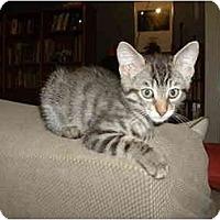 Adopt A Pet :: Cornstalk - Davis, CA
