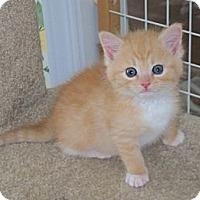 Adopt A Pet :: Simba - Harrisburg, NC
